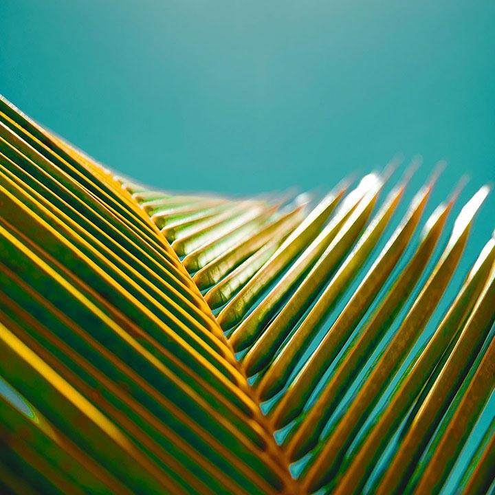 déco palmier