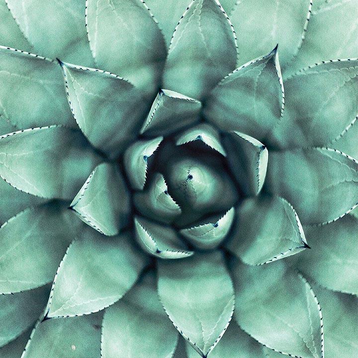 plante grasses pour touche de vert dans décoration